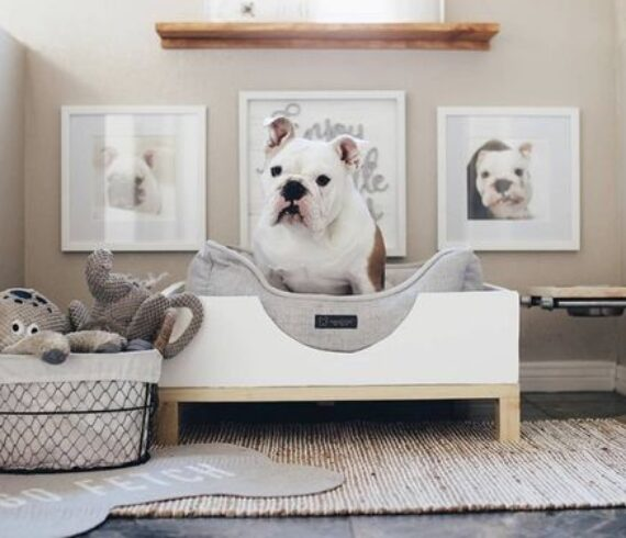 Interior Design with Your Pets In Mind - Talie Jane Interiors